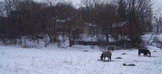 2 horses in snow